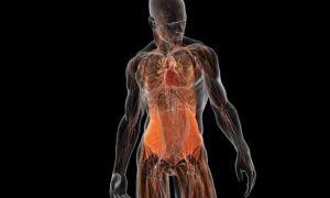 Обследование всего тела на МРТ — какие заболевания можно диагностировать