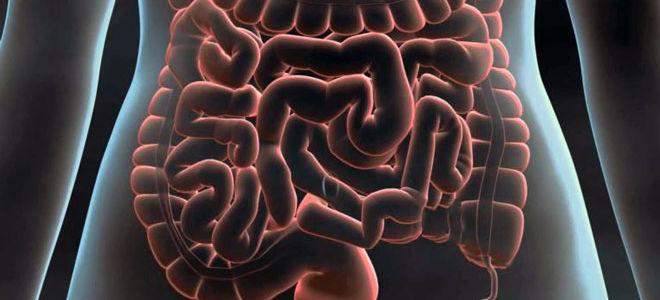 Что лучше для обследования кишечника — УЗИ или колоноскопия?