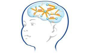 Для чего делают детям МРТ головного мозга — особенности процедуры, возможный результат