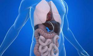 Особенности обследования органов брюшной полости на МСКТ с контрастированием и без