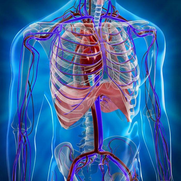 КТ грудной клетки с контрастом